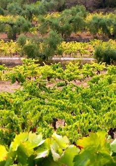 Orto Vins